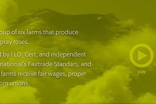 fairtrade-diseño-web-para-esta-empresa-de-quito-ecuador