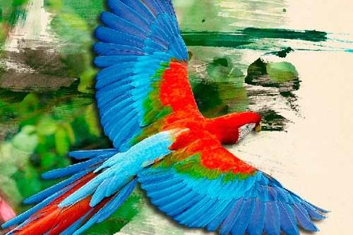 consulta-amazonica-cdrom-portada-trabajos-multimedia-quito-ecuador